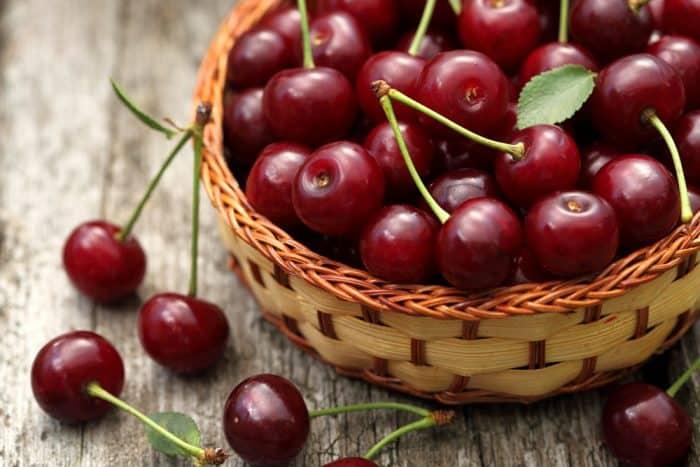 Подробное описание сорта вишни уральская рубиновая