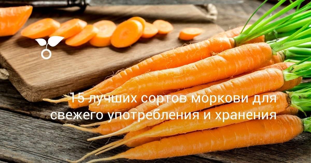 Как уберечь морковь от морковной мухи