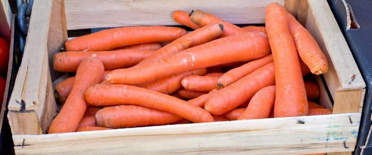 Как хранить морковь в домашних условиях: правила, методы хранения