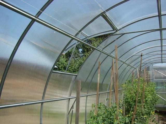 Почему скручиваются листья у томатов? 9 готовых решений, что делать, если листья томатов скручиваются внутрь, вверх или вниз.