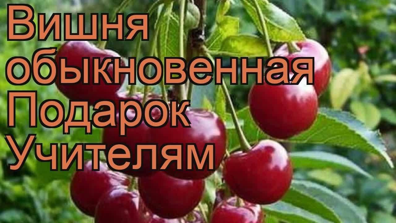 Результаты сортоиспытания вишни и черешни на калужском гсу есичев с. т