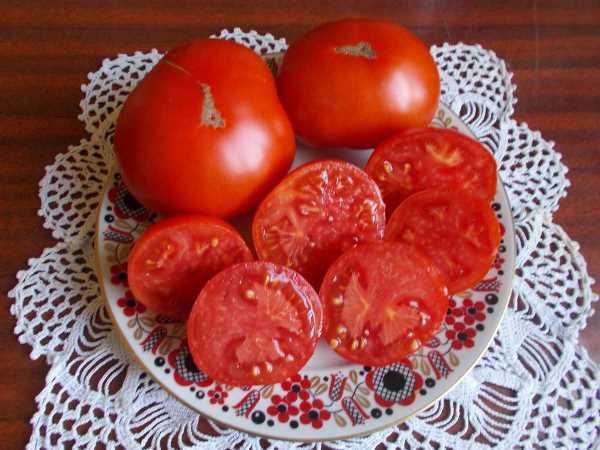 Характеристика и описание сорта томата монгольский карлик, его выращивание и урожайность