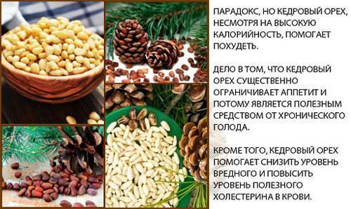 Жмых кедрового ореха: калорийность, польза и вред