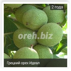 Грецкий орех идеал характеристики сорта урожайность фото отзывы