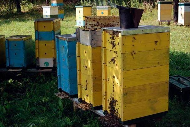 Изготовление 10 рамочного улья дадан и содержание пчел