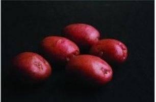 Описание сорта картофеля романо особенности посадки и ухода