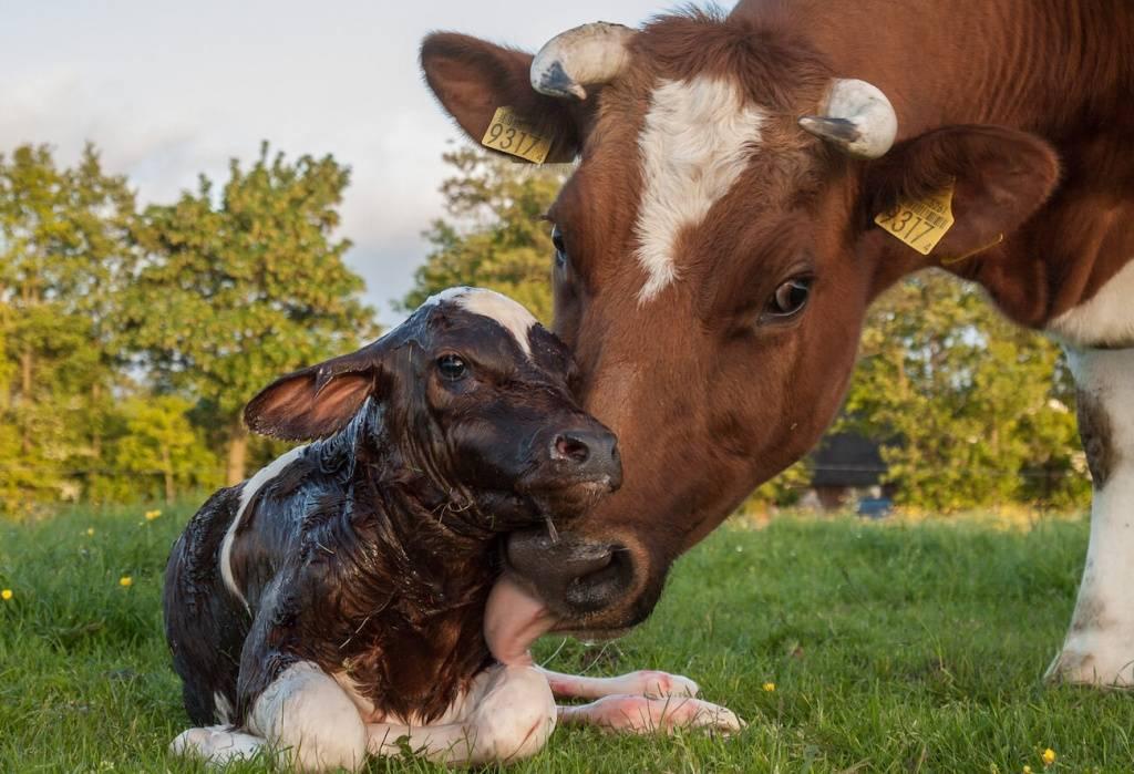 Виды абортов у животных