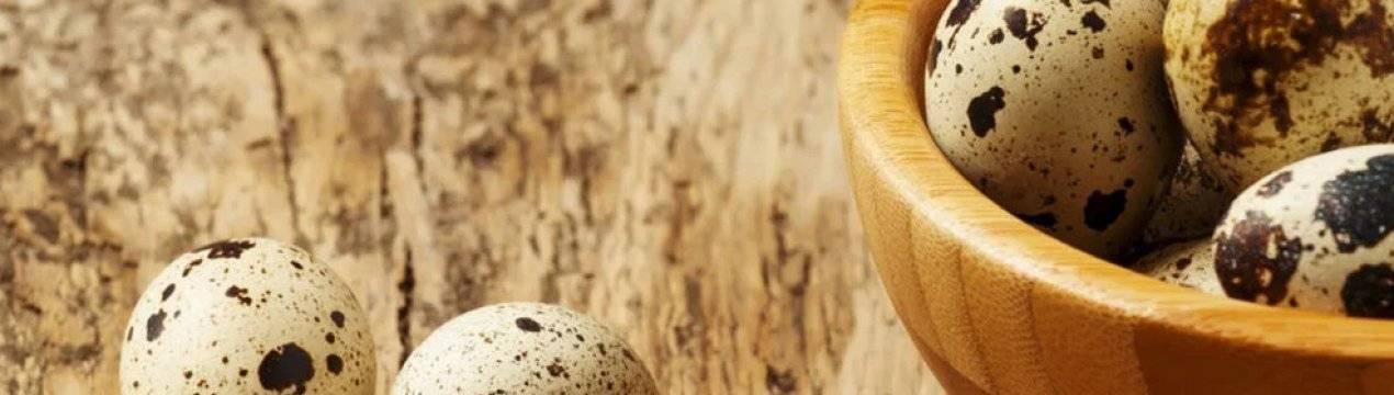 Режим инкубации перепелиных яиц