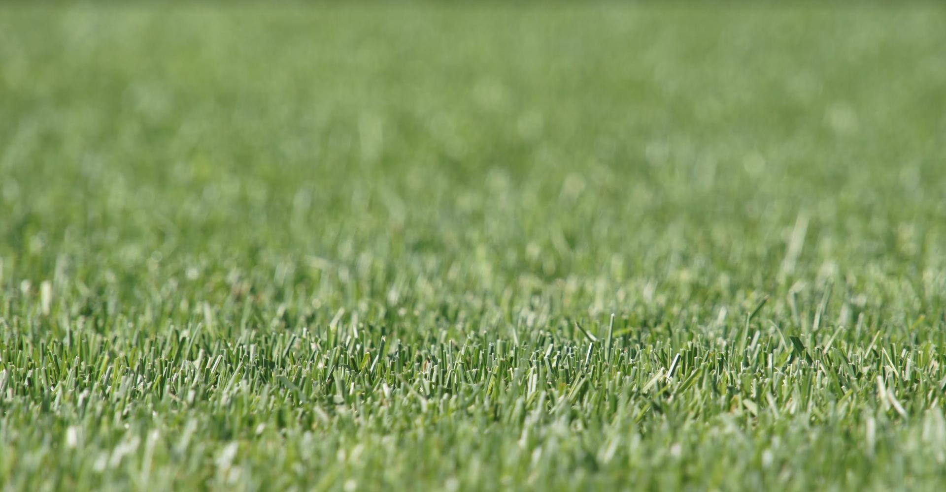 Искусственный газон для ландшафтного дизайна