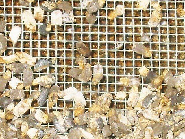 Заболевание аскосфероз у пчел