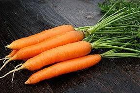Лучшие сорта моркови: описание и особенности