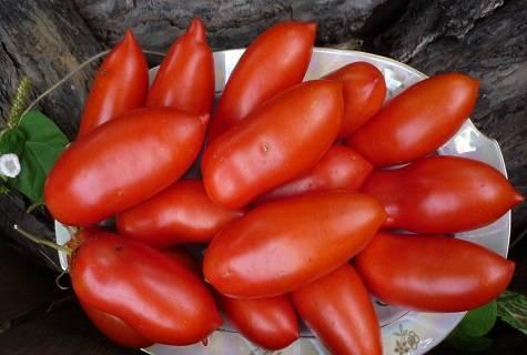 Плюсы, минусы, описание, характеристика, урожайность, фото, видео и болезни томата сорта «хохлома»