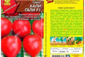 Характеристика и описание сорта томата хали гали, его урожайность