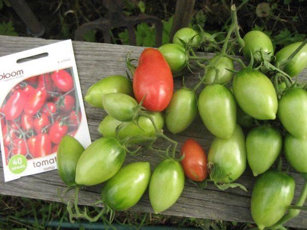 Характеристика и правила выращивания томата рома