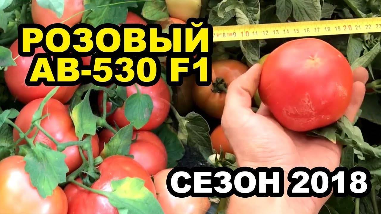 Сорта помидоров для краснодарского края, открытый грунт