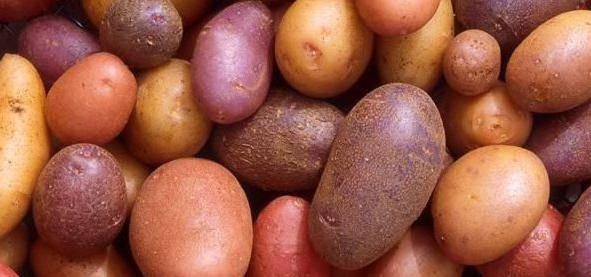 Картофель армада: описание сорта