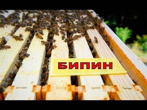 10 ответов на вопросы по обработке пчел бипином