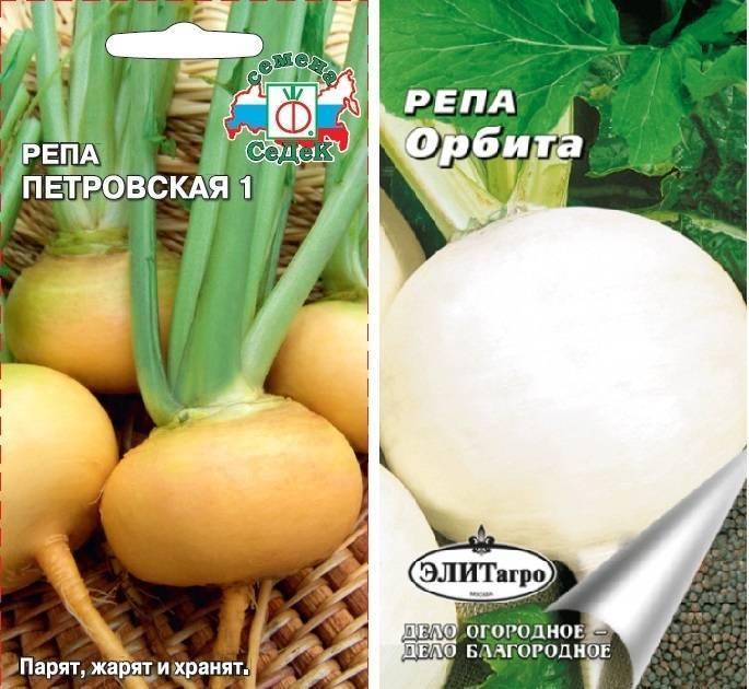 Пошаговая инструкция как и когда сажать репу семенами?