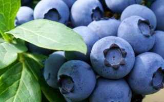 Голубика либерти: характеристики и особенности сорта