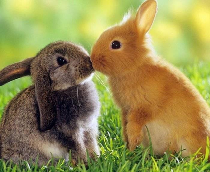 Болезни ушей у кроликов лечение дома