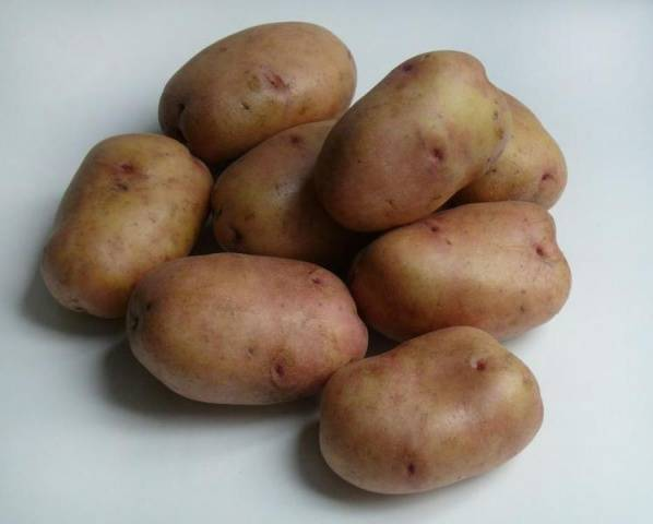 Сорт картофеля беллароза: характеристика и описание, посадка и уход