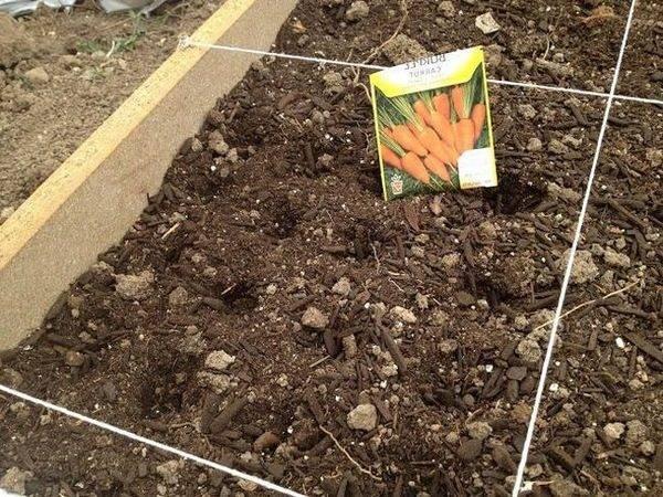 Посадка моркови под зиму: как получить богатый урожай