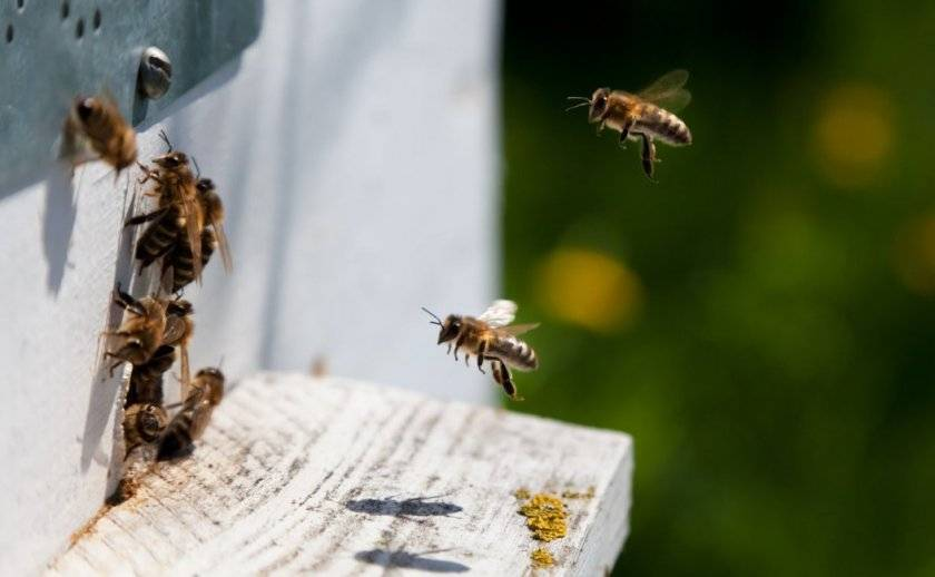 Осенние работы на пасеке, ревизия пчелосемей.