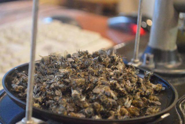 Пчелиный подмор: польза и вред, как принимать