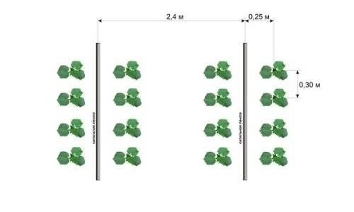 Основные схемы посадки огурцов