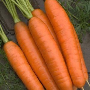 Чем характеризуется лосиноостровская морковь?