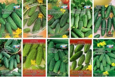 Семена огурцов — лучшие сорта для открытого грунта