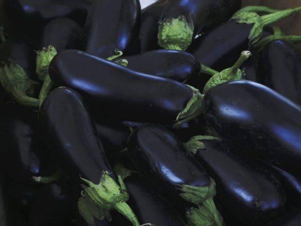 Баклажан арасидан — описание сорта, фото, отзывы, посадка и уход
