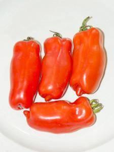 Уникальные помидоры похожие на поленья — томат дрова: описание сорта и особенности выращивания
