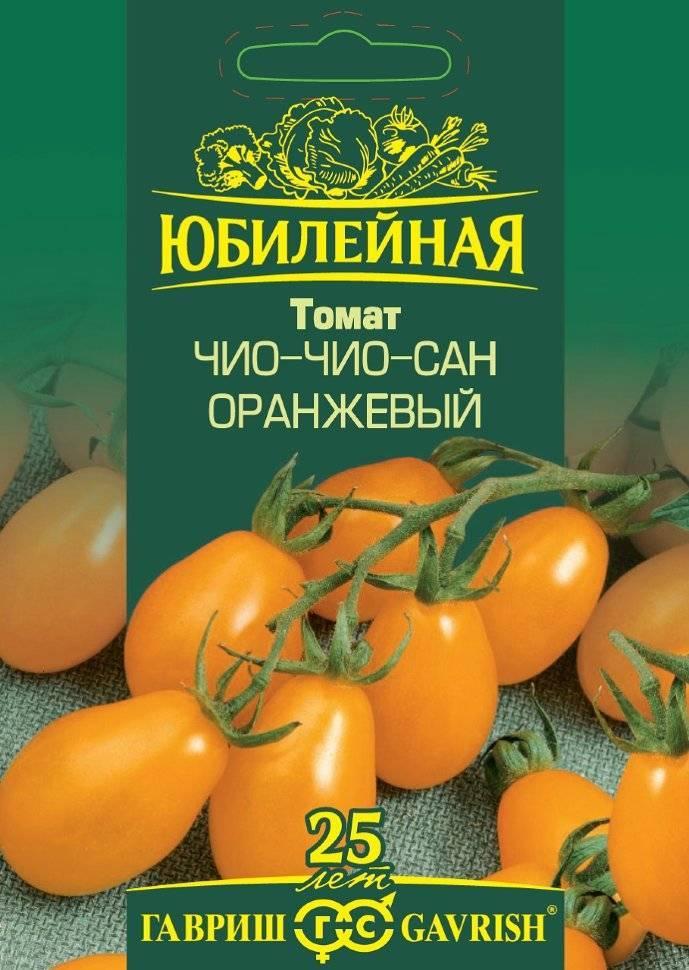 Томат «чиочио сан» – могут ли помидоры плодоносить круглый год?