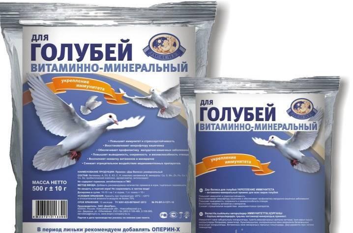 Английский крестовый голубь (голубь «монах») — статьи — rex24.ru: домашние животные, выбор, уход и воспитание, каталог компаний, эксперты.
