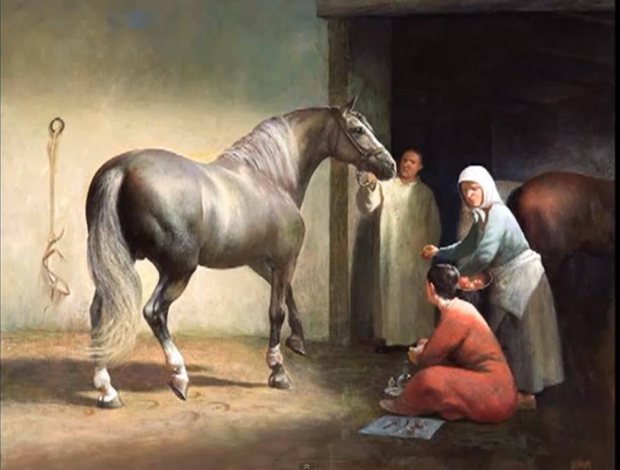 Андалузская лошадь — история породы, образ жизни и особенности разведения
