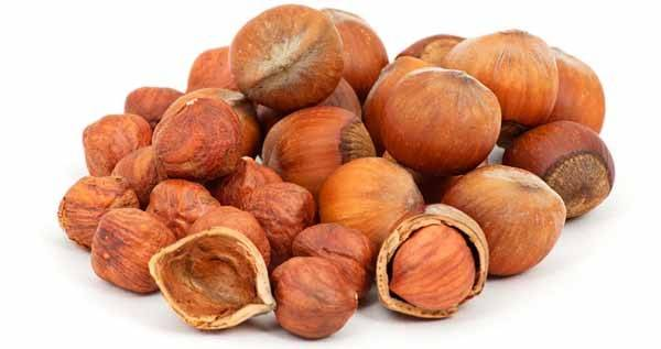 Орехи фундук и лещина (лесной орех): польза и вред