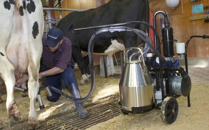 Беспривязное содержание коров плюсы и минусы технология оборудование