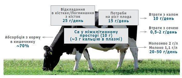 Симптомы и лечение послеродовых болезней у коров