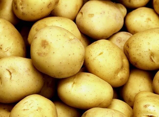Картофель чародейка — описание сорта, фото, отзывы, посадка и уход