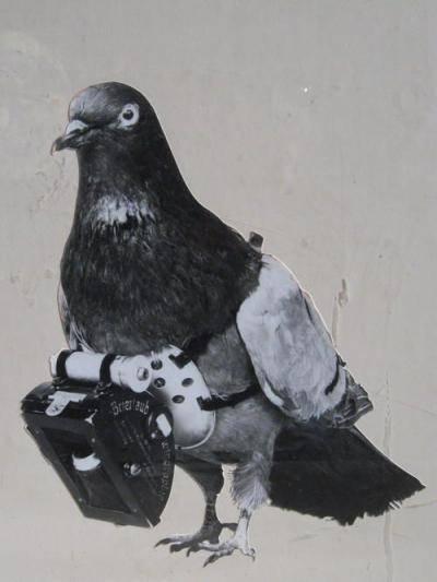 Любопытные факты из истории голубиной почты. почтовые голуби: как выглядят, как находят дорогу к адресату что можно переправлять с помощью почтового голубя