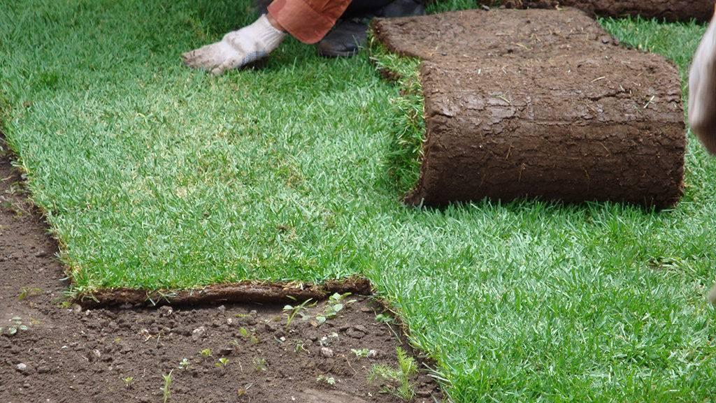Рулонный газон — виды и правила ухода