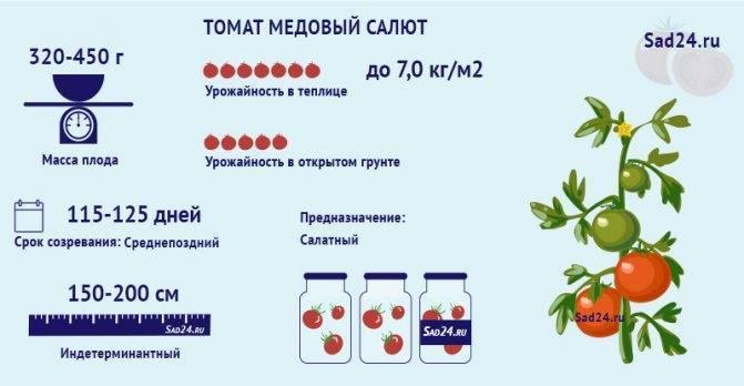 Описание и характеристика сорта томата медовый салют
