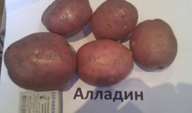 Описание сорта картофеля уладар