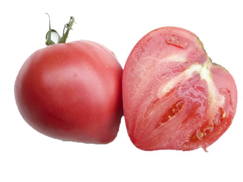 Томат розовый спам: отзывы, фото, урожайность, характеристика и описание сорта, достоинства и недостатки
