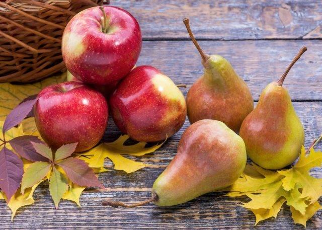 Груши: польза и вред для организма | пища это лекарство