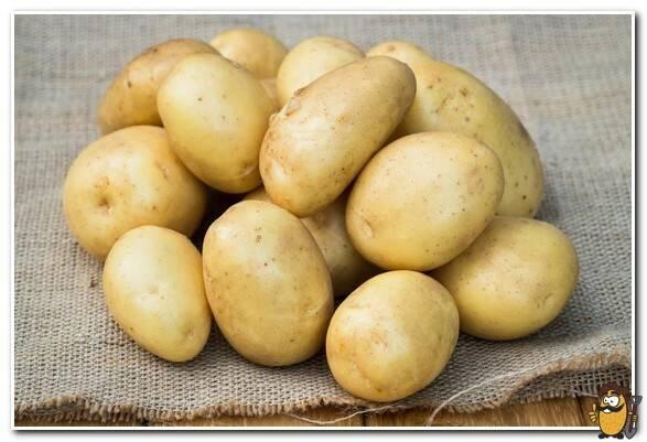 Сорт картофеля «вега» – описание и фото