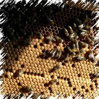 Когда ставить второй корпус на улей - советы опытных пасечников бочка мёда