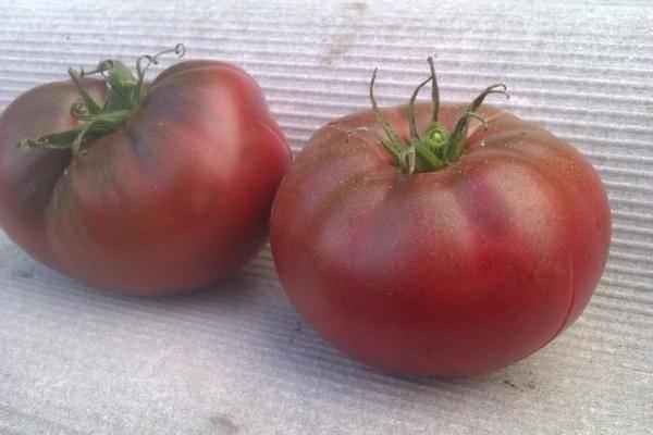 Томат со сладким названием и простой агротехникой. как вырастить зефир f1 на открытом участке