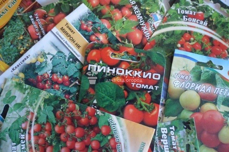 Как посадить и вырастить помидоры на балконе: лучшие сорта и пошаговая инструкция